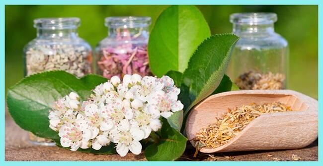 La cosmética vegetal