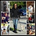 Las mascotas de las celebrities