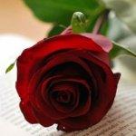 ¿Tu pareja no lee? te ofrecemos otras alternativas para que le regales en Sant Jordi